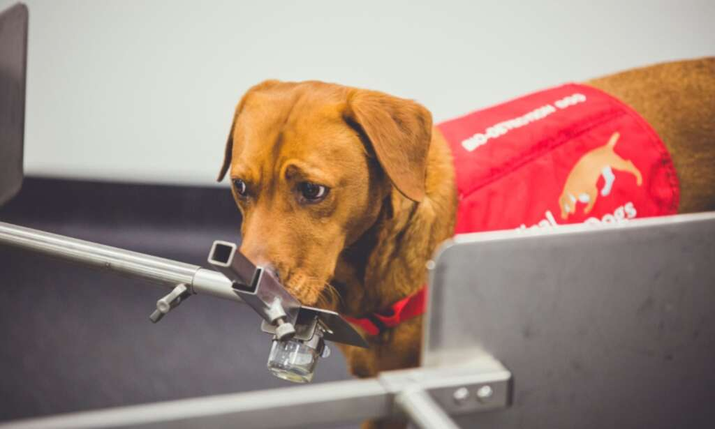 """Development of a """"robotic nose"""" that mimics cancer by imitating dogs"""