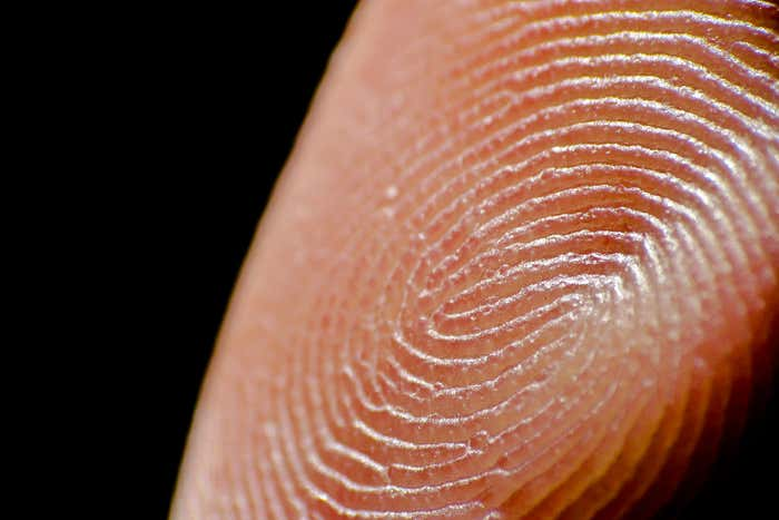 New research reveals key role of fingertips in touching objects