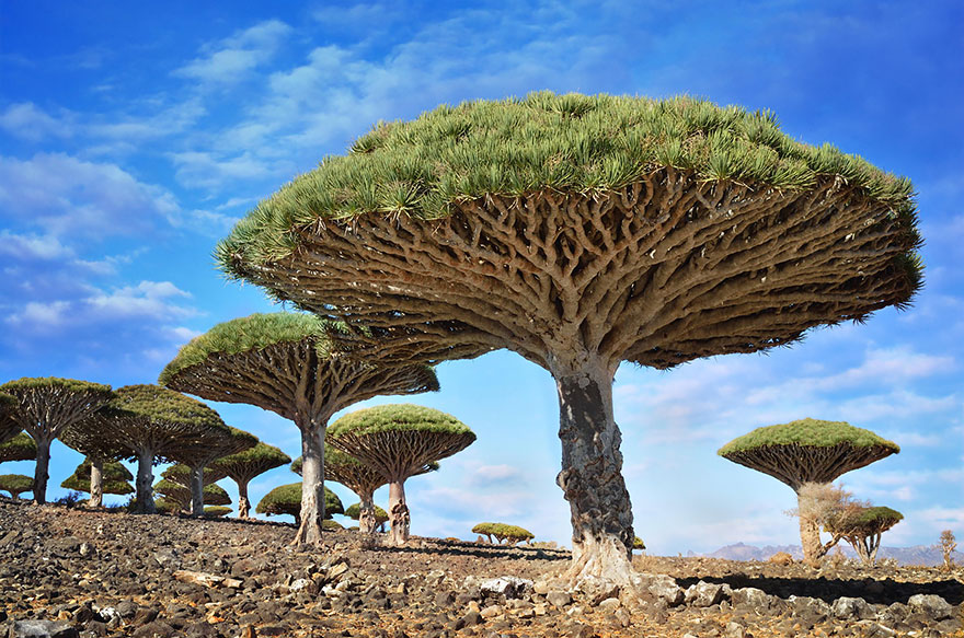1621048630 198 Take a look at the most different trees in the Take a look at the most different trees in the world 4