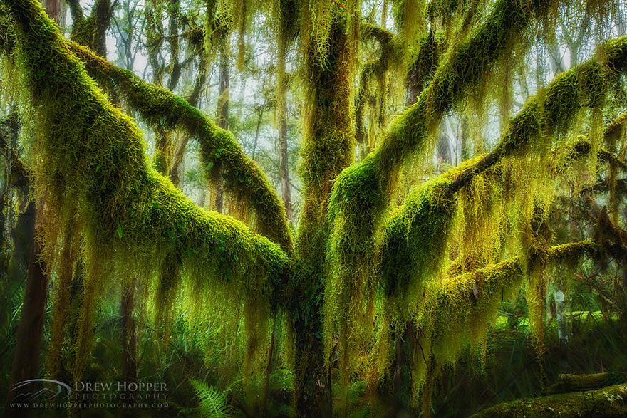 1621048631 347 Take a look at the most different trees in the Take a look at the most different trees in the world 6