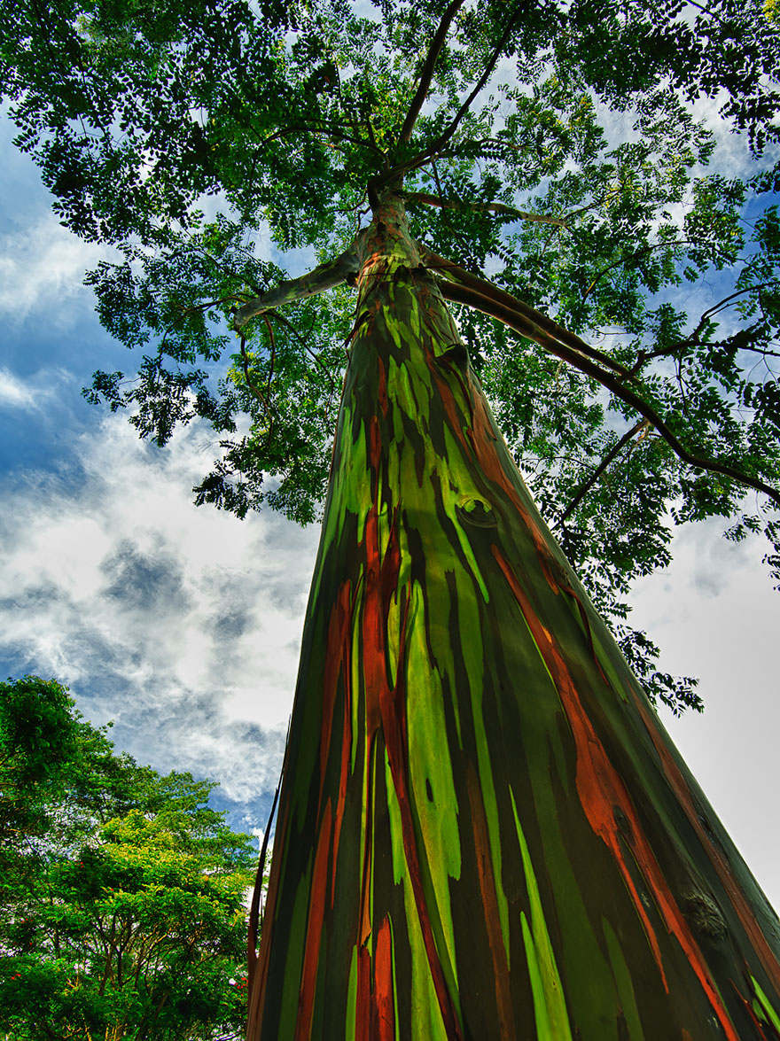 1621048632 71 Take a look at the most different trees in the Take a look at the most different trees in the world 8