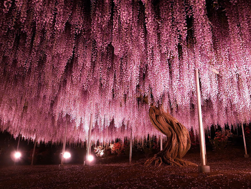 1621048633 623 Take a look at the most different trees in the Take a look at the most different trees in the world 10
