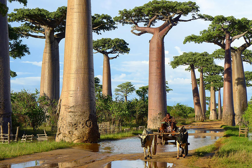 1621048634 947 Take a look at the most different trees in the Take a look at the most different trees in the world 14