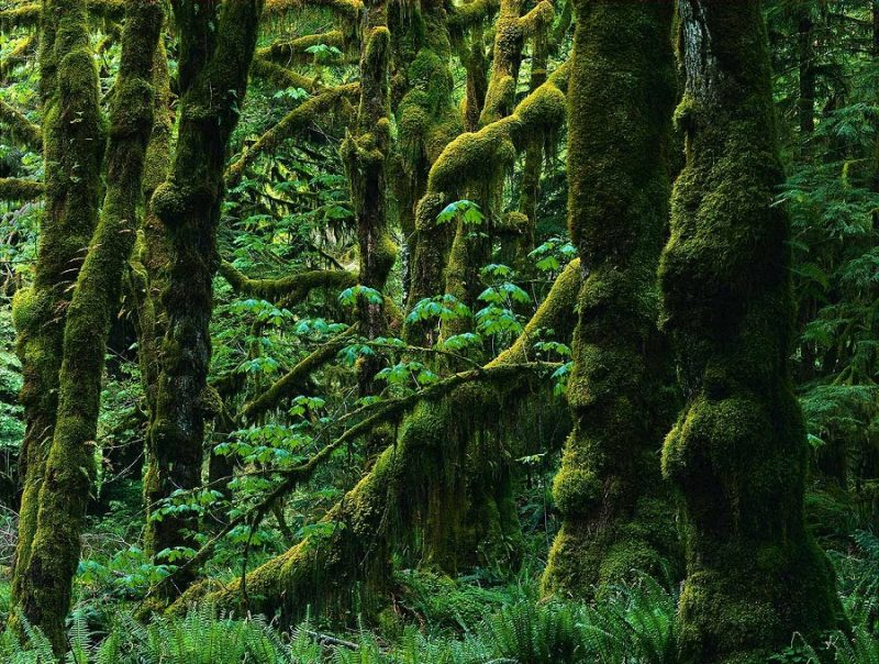 1621048635 453 Take a look at the most different trees in the Take a look at the most different trees in the world 18
