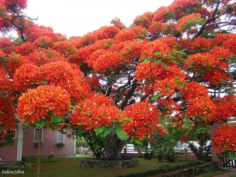 1621048635 920 Take a look at the most different trees in the Take a look at the most different trees in the world 16